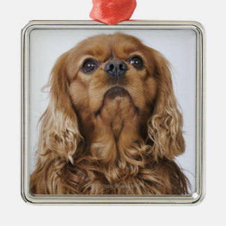 Cavalier King Charles Spaniel looking up Silver-Colored Square Decoration