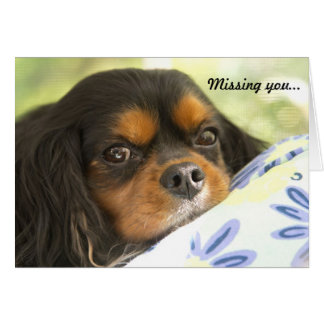 Cavalier King Charles Spaniel Missing You Card