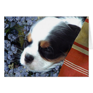 Cavalier King Charles Spaniel Note Card