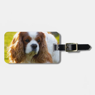 Cavalier King Charles Spaniel Portrait Luggage Tag