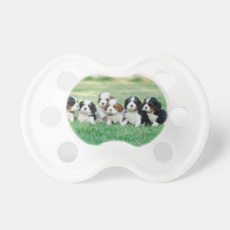 Cavalier King Charles Spaniel puppies Baby Pacifiers