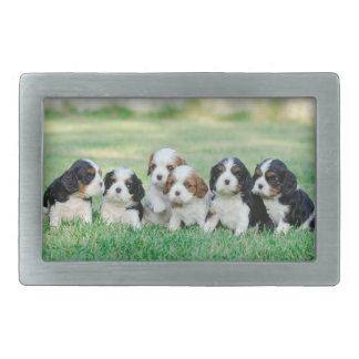 Cavalier King Charles Spaniel puppies Belt Buckle