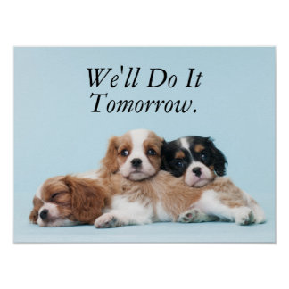 Cavalier King Charles Spaniel Puppies Sleeping Poster
