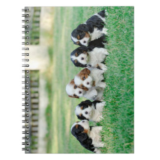 Cavalier King Charles Spaniel puppies Spiral Note Books