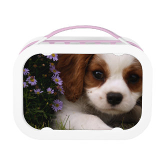 Cavalier King Charles Spaniel Puppy behind flowers Lunch Boxes