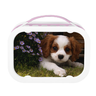 Cavalier King Charles Spaniel Puppy behind flowers Lunchbox