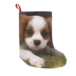 Cavalier King Charles Spaniel Puppy behind flowers Small Christmas Stocking