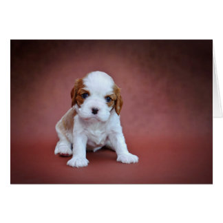Cavalier King Charles Spaniel puppy Card