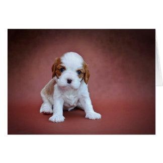 Cavalier King Charles Spaniel puppy Card