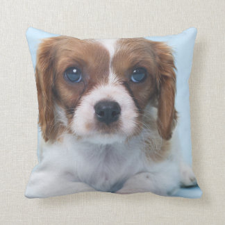 Cavalier King Charles Spaniel Puppy Cushion