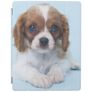 Cavalier King Charles Spaniel Puppy iPad Cover