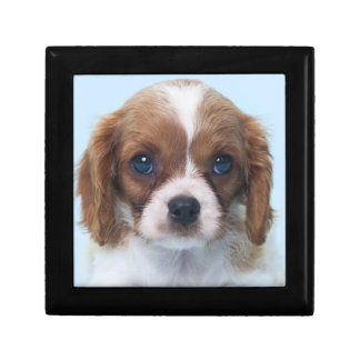 Cavalier King Charles Spaniel Puppy Small Square Gift Box
