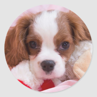 Cavalier King Charles Spaniel Puppy With Toy Classic Round Sticker