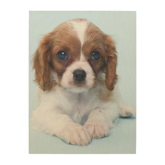 Cavalier King Charles Spaniel Puppy Wood Print
