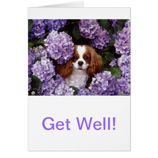 Cavalier King Charles Spaniel Red and White Card