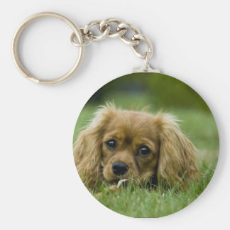 Cavalier King Charles Spaniel Ruby Basic Round Button Key Ring