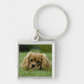 Cavalier King Charles Spaniel Ruby Silver-Colored Square Key Ring