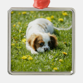 Cavalier King Charles Spaniel Silver-Colored Square Decoration