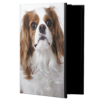 Cavalier King Charles Spaniel sitting in studio iPad Air Covers
