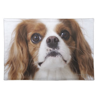 Cavalier King Charles Spaniel sitting in studio Placemats