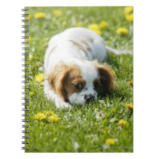 Cavalier King Charles Spaniel Spiral Notebook