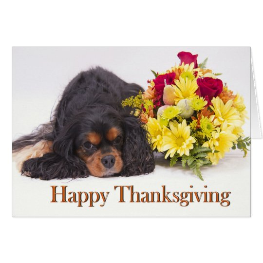 Cavalier King Charles Spaniel Thanksgiving Card