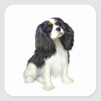 Cavalier King Charles - Tri Colored Square Stickers
