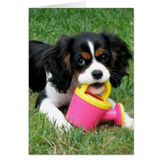 Cavalier Pup Greeting Card