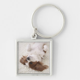 Cavalier showing belly key ring
