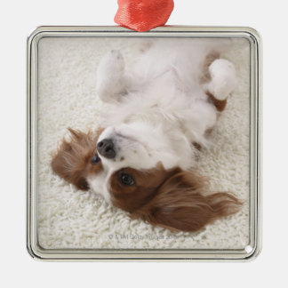 Cavalier showing belly Silver-Colored square decoration