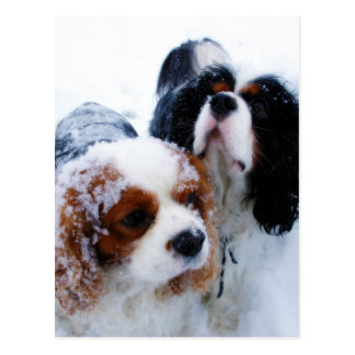 Cavaliers in the Snow Postcard