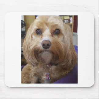 Cavapoo or Cavadoodle products Mouse Mat