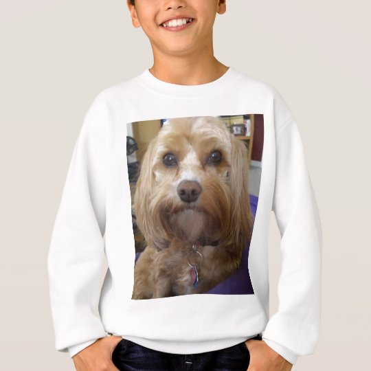 Cavapoo or Cavadoodle products Sweatshirt