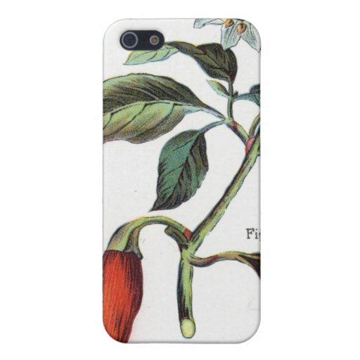 cayenne pepper Flower iPhone 5 Case