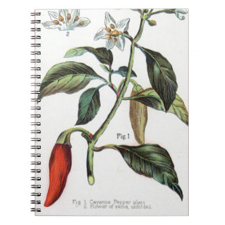 cayenne pepper Flower Note Book