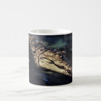 Cayman crocodile mug