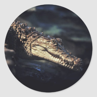 Cayman crocodile sticker