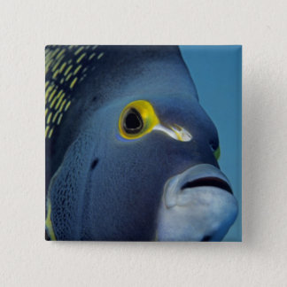 Cayman Islands, French Angelfish Pomacanthus 15 Cm Square Badge