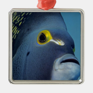 Cayman Islands, French Angelfish Pomacanthus Christmas Ornament