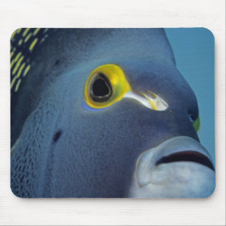 Cayman Islands, French Angelfish Pomacanthus Mouse Mat