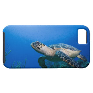 Cayman Islands, Little Cayman Island, Underwater 2 iPhone 5 Case