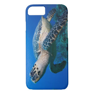 Cayman Islands, Little Cayman Island, Underwater 2 iPhone 8/7 Case