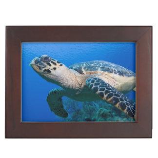 Cayman Islands, Little Cayman Island, Underwater 2 Keepsake Box