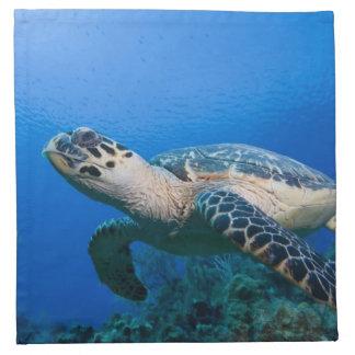 Cayman Islands, Little Cayman Island, Underwater 2 Napkin