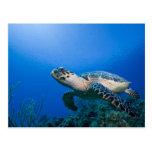 Cayman Islands, Little Cayman Island, Underwater 2 Postcards