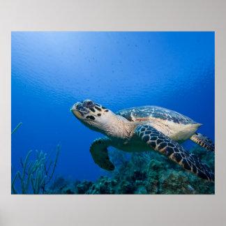 Cayman Islands, Little Cayman Island, Underwater 2 Poster