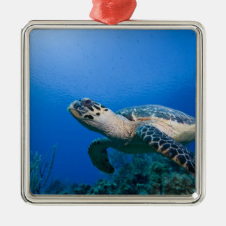 Cayman Islands, Little Cayman Island, Underwater 2 Silver-Colored Square Decoration