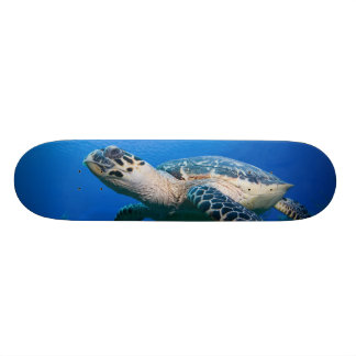 Cayman Islands, Little Cayman Island, Underwater 2 Skateboard Decks
