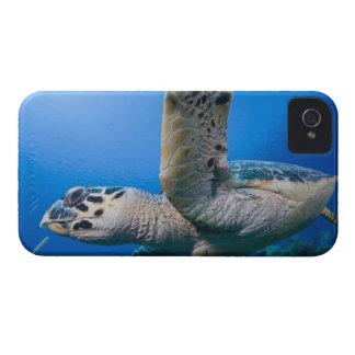 Cayman Islands, Little Cayman Island, Underwater Case-Mate iPhone 4 Cases