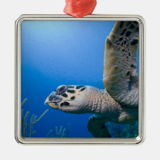 Cayman Islands, Little Cayman Island, Underwater Christmas Ornament